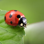 Develop a Comprehensive Home Pest Defense for Your Property