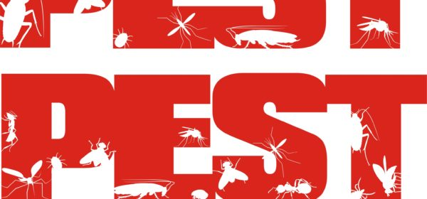 Hiring An Absolute Pest Control Company